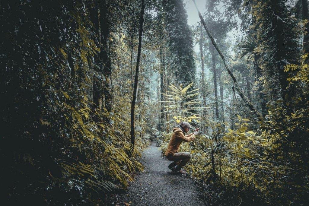 cairns regenwoud australie