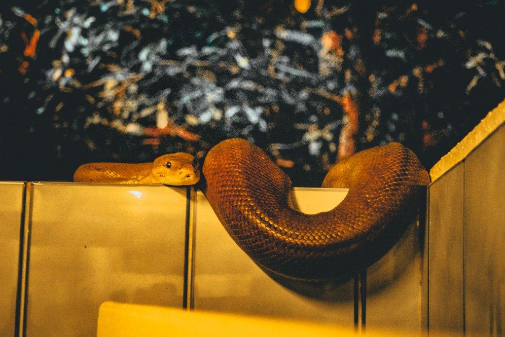 slang australie