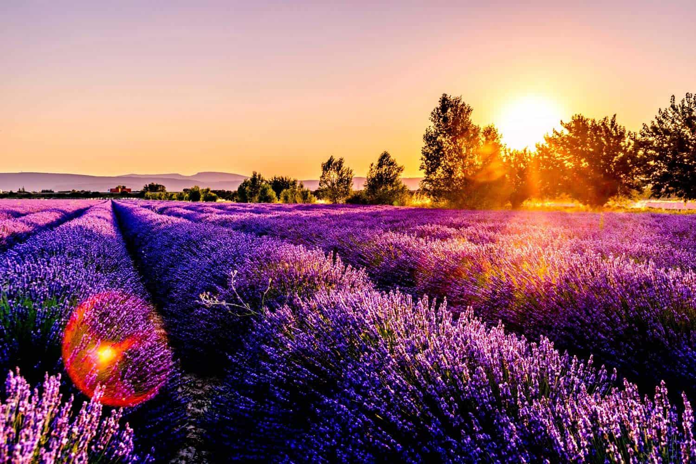 provence in frankrijk wat doen lavendel veld