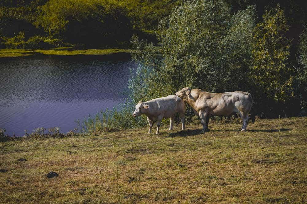 wandelen in Maaseik