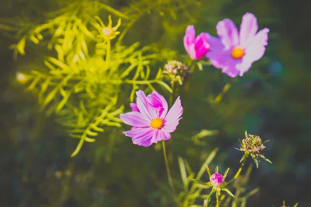 bloemen van maaseik