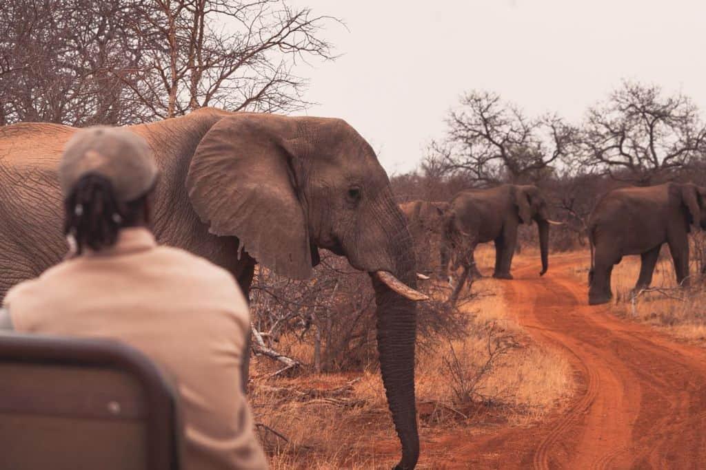 safari in krugerpark