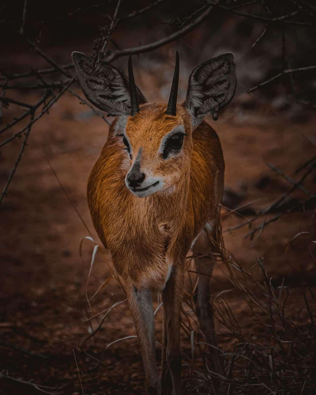 mooiste safaritocht zuid afrika