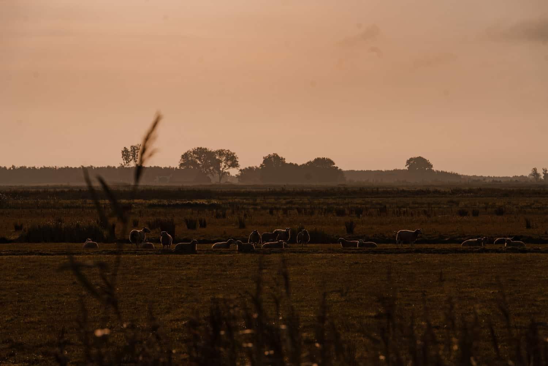 zonsopgang biesbosch