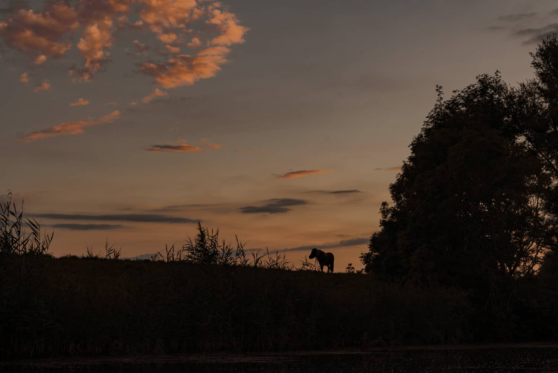 kanoen bij zonsondergang biesbos