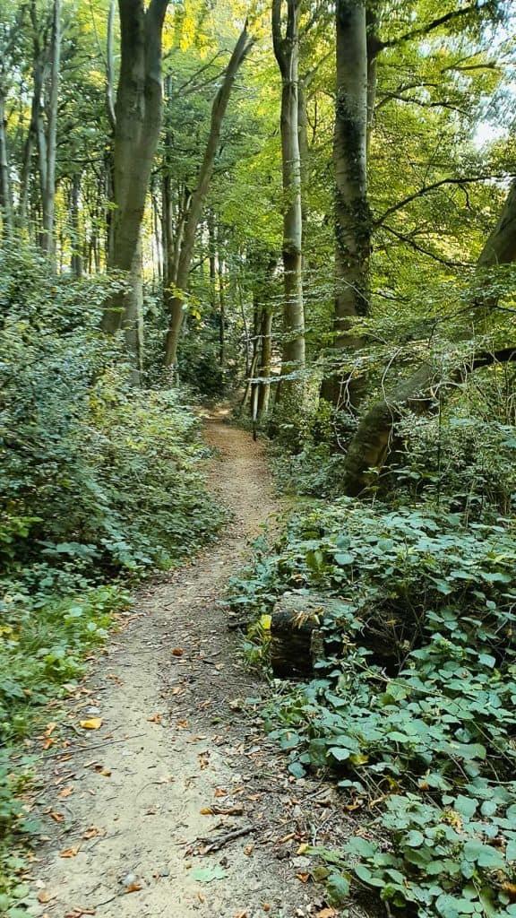 wandelpad bossen vlaamse ardennen groen en natuur