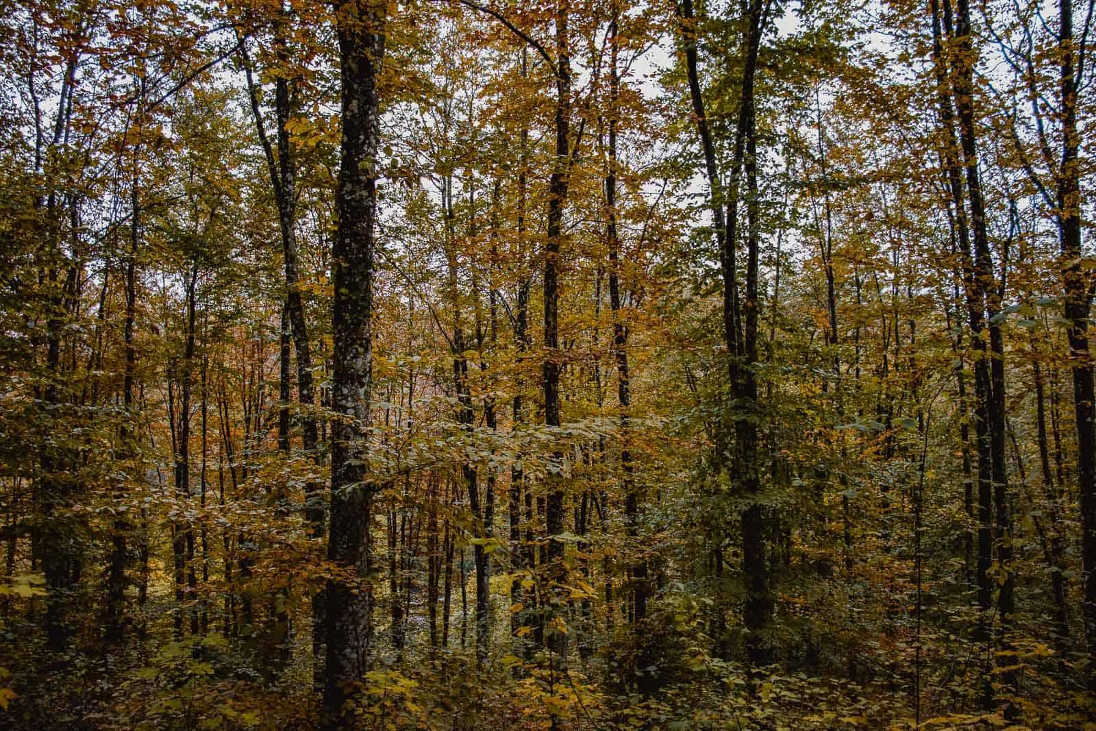 wandelen in de bossen in de Ardennen