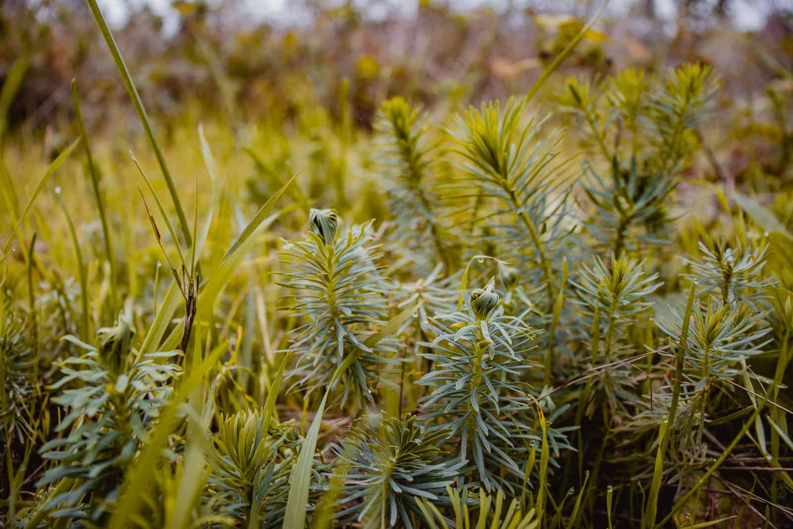 planten in de Ardennen, bossen