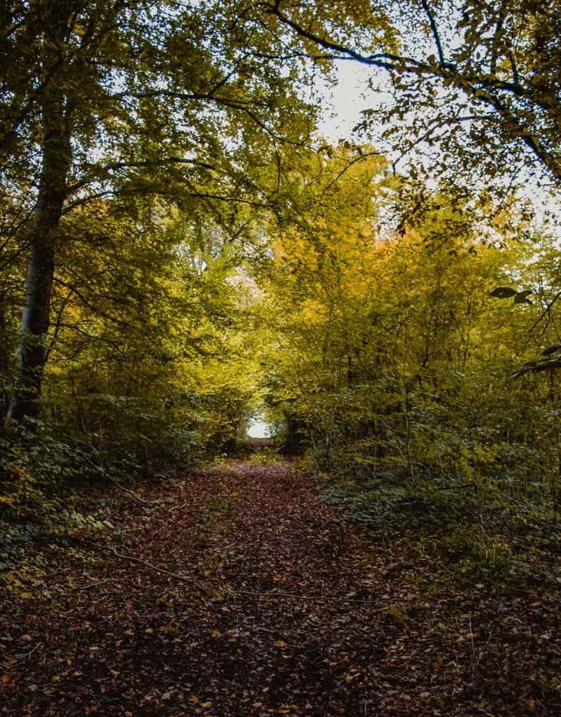 wandelpad in de Ardennen