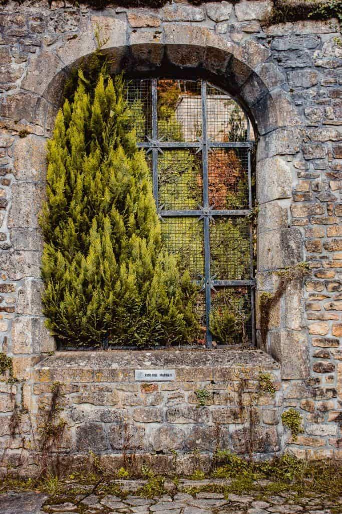 raam met plant in ruïnes abdij van orval