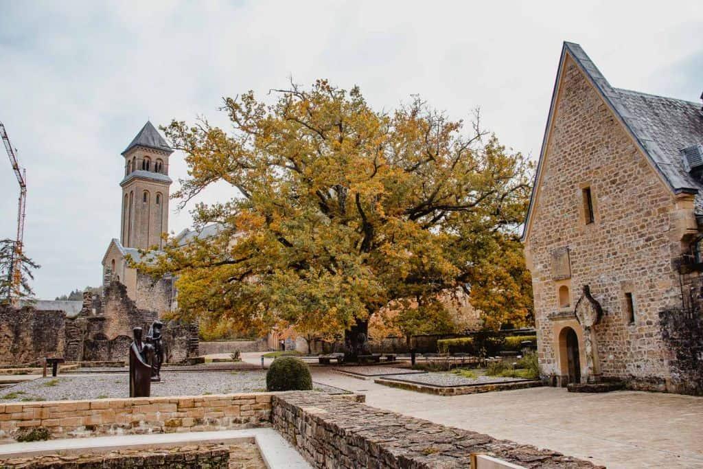abdij van orval binnenplaats boom