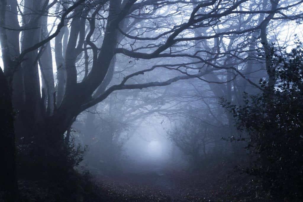 Transsylvanië en de Roemeense Karpaten: het spookbos van Dracula