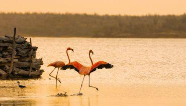 flamingos spotten caraiben