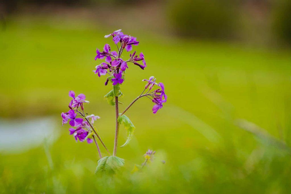 bloesem bloem borgloon limburg