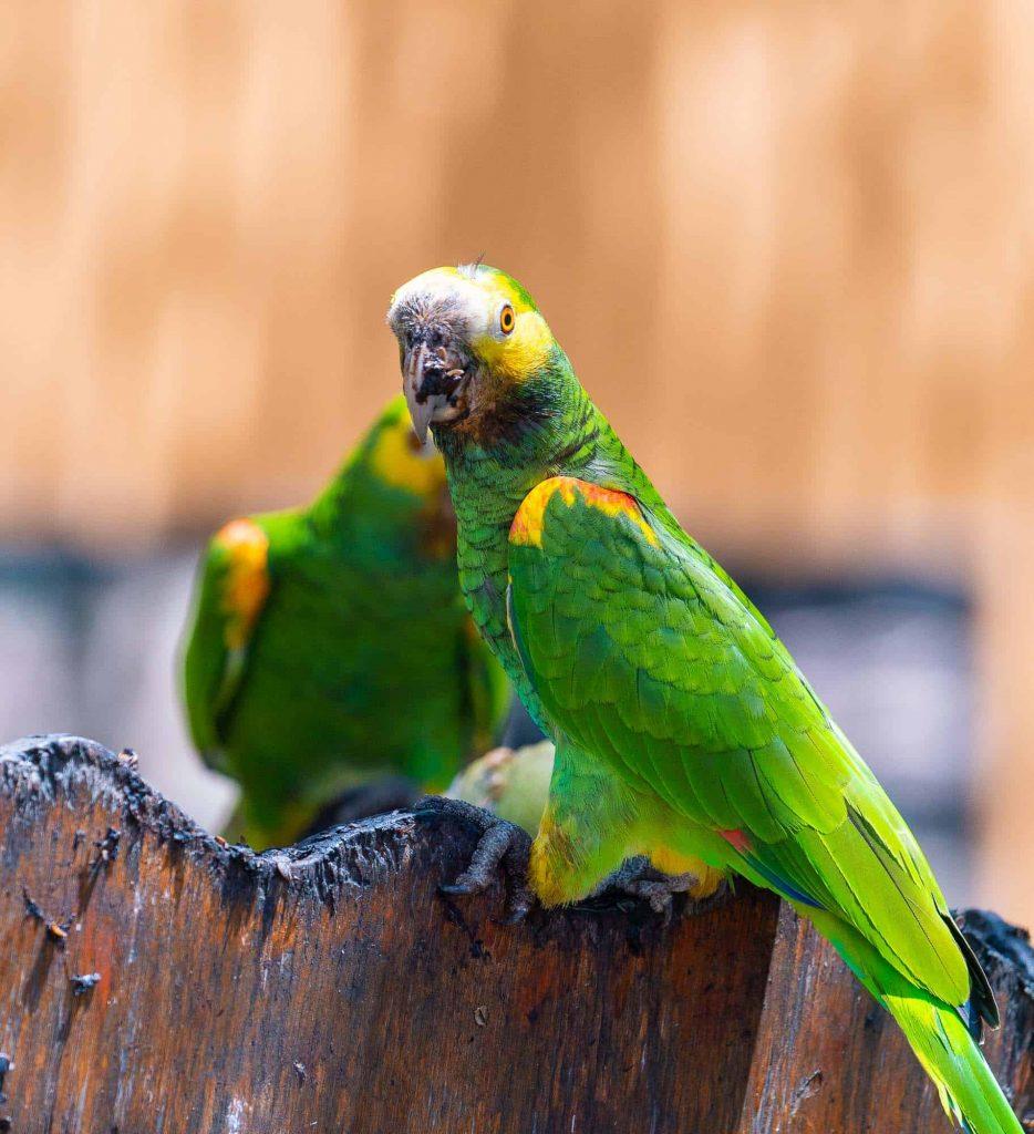 vogels spotten op bonaire