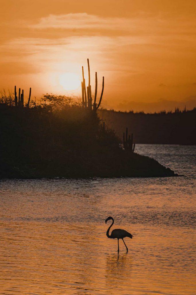 flamingo plaats bonaire