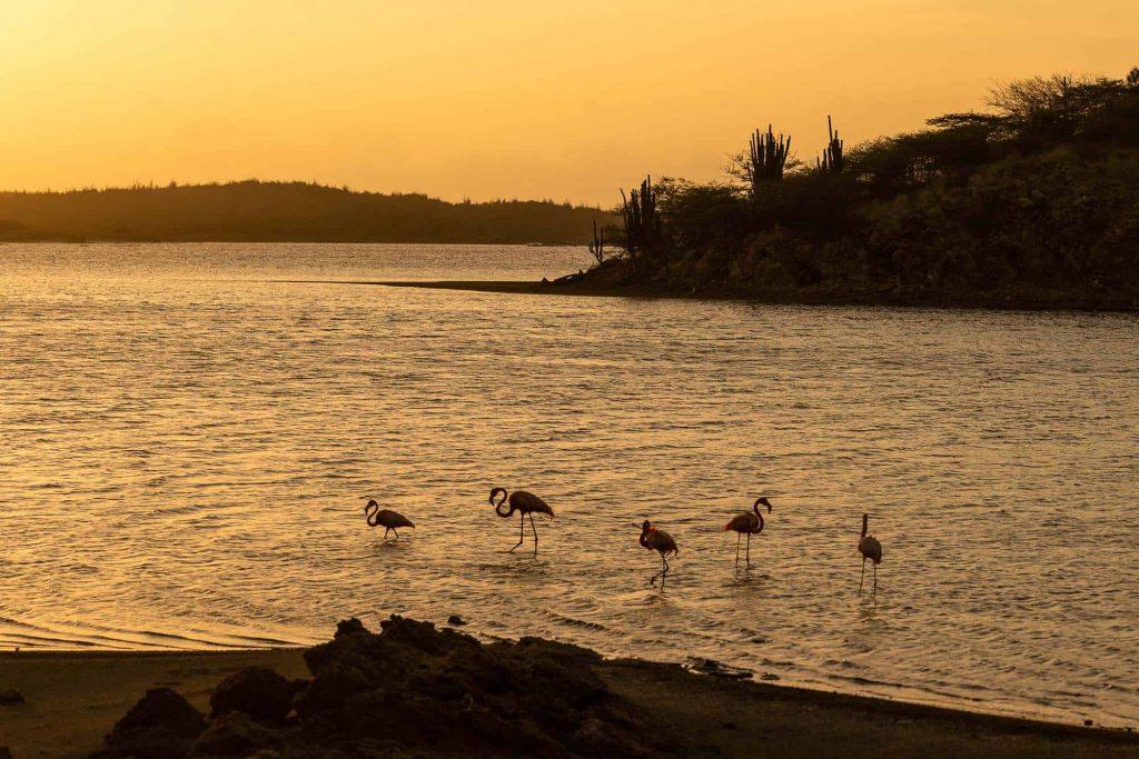 flamingos kijken op bonaire