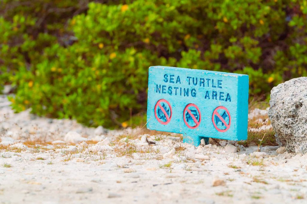 zeeschildpadden bonaire