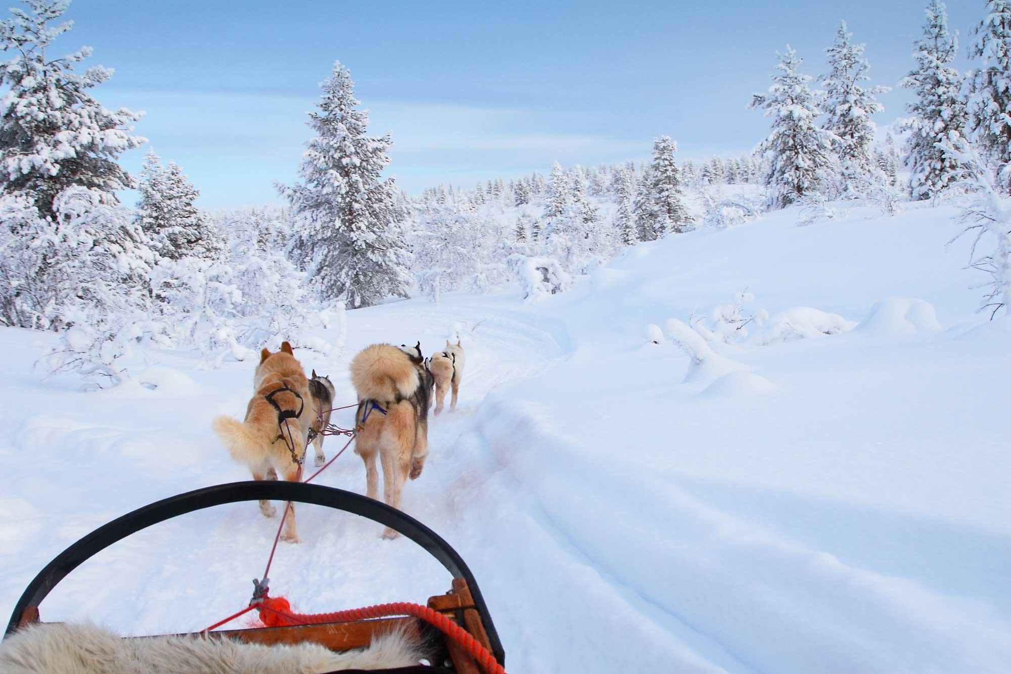 husky tours in zweeds lapland