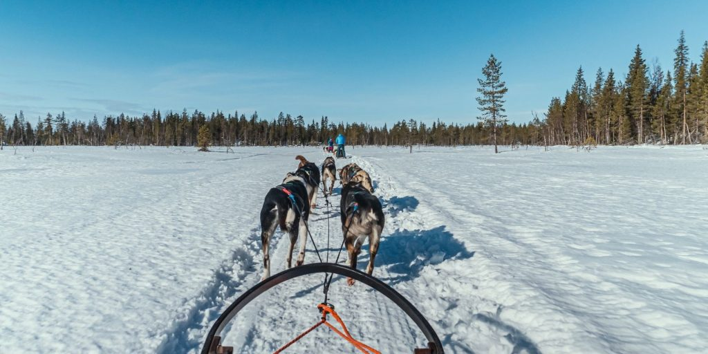waar huskytochten boeken zweden