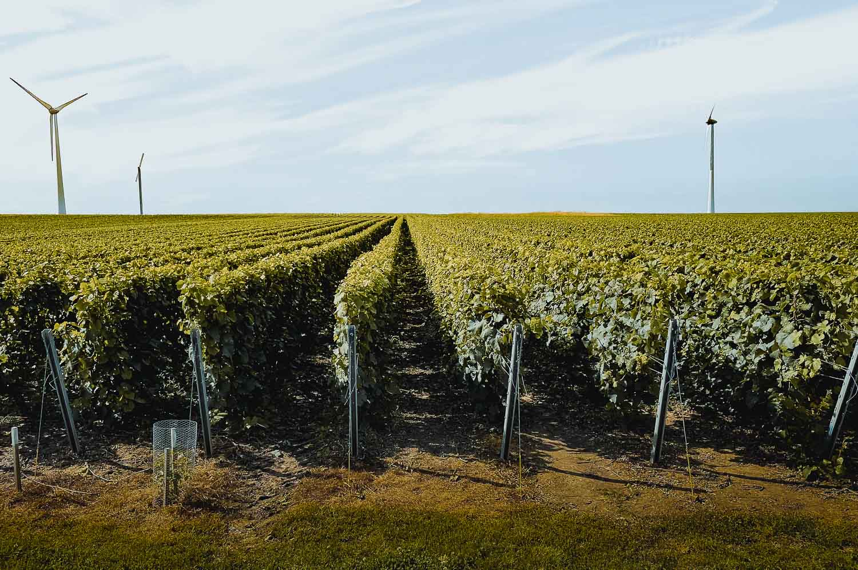 wijnranken boomgaard wijn bergen