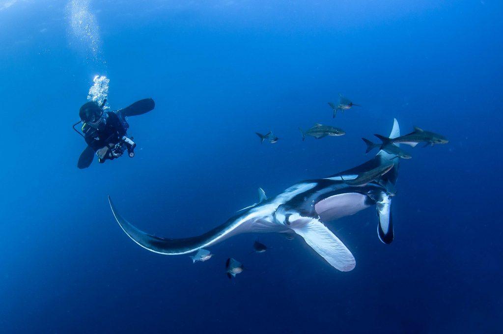 manta ray thailand duiken